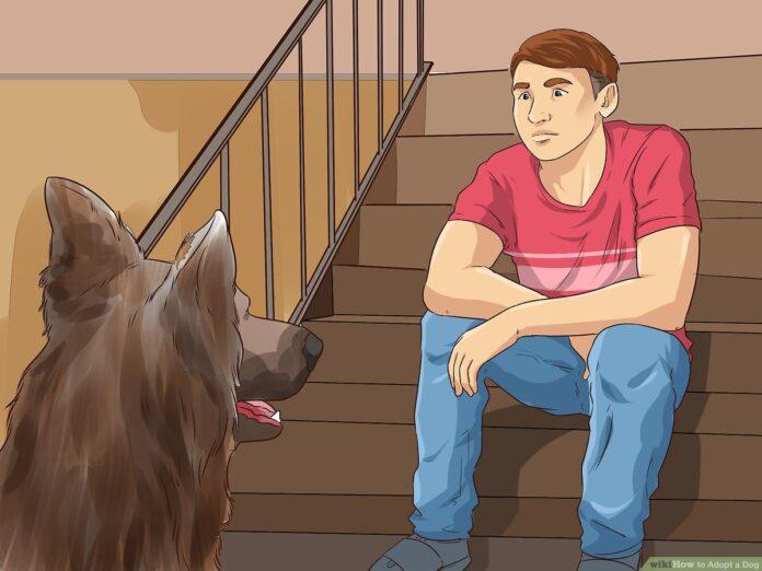 5 Steps to Take When Adopting a Pet