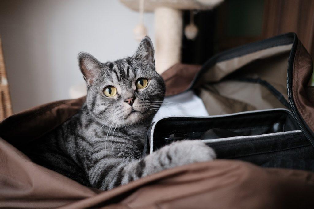 C:\Users\PC\Downloads\Cat-Moving-1-1024x683.jpg